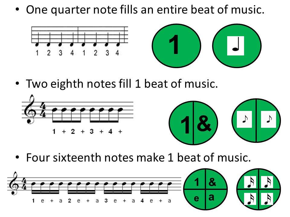 1 1 & One quarter note fills an entire beat of music.