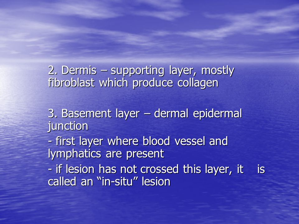 2. Dermis – supporting layer, mostly fibroblast which produce collagen
