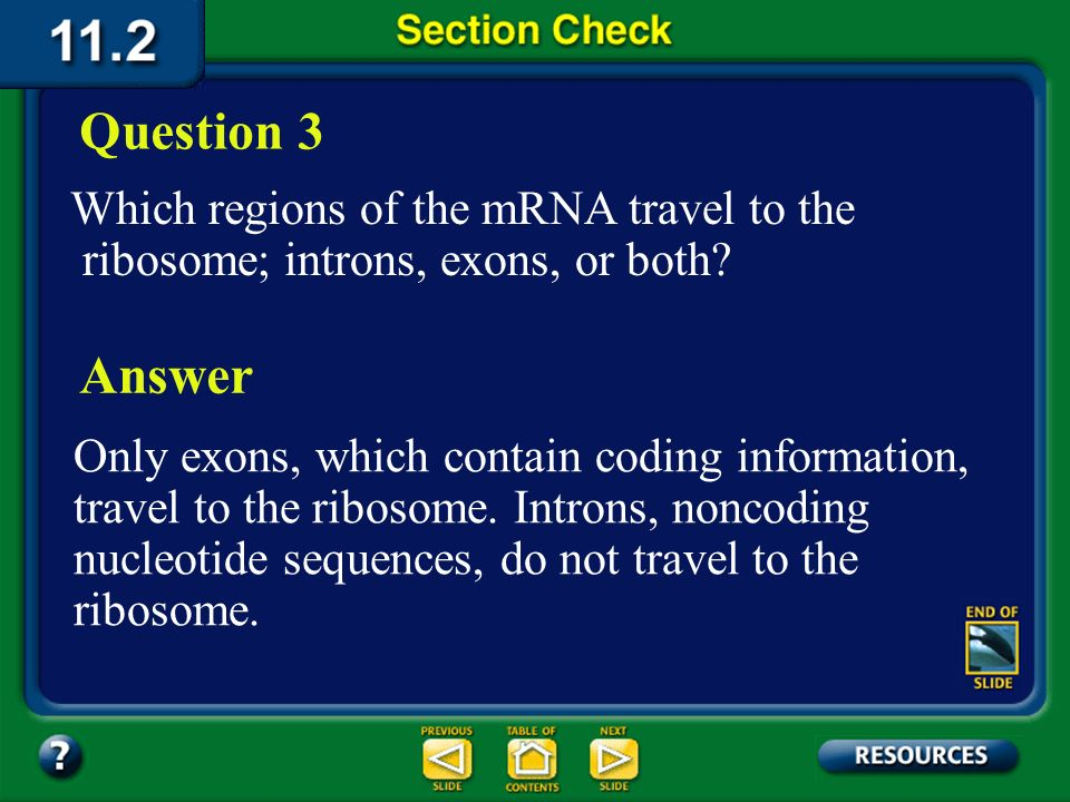 Question 3 Which regions of the mRNA travel to the ribosome; introns, exons, or both Answer.