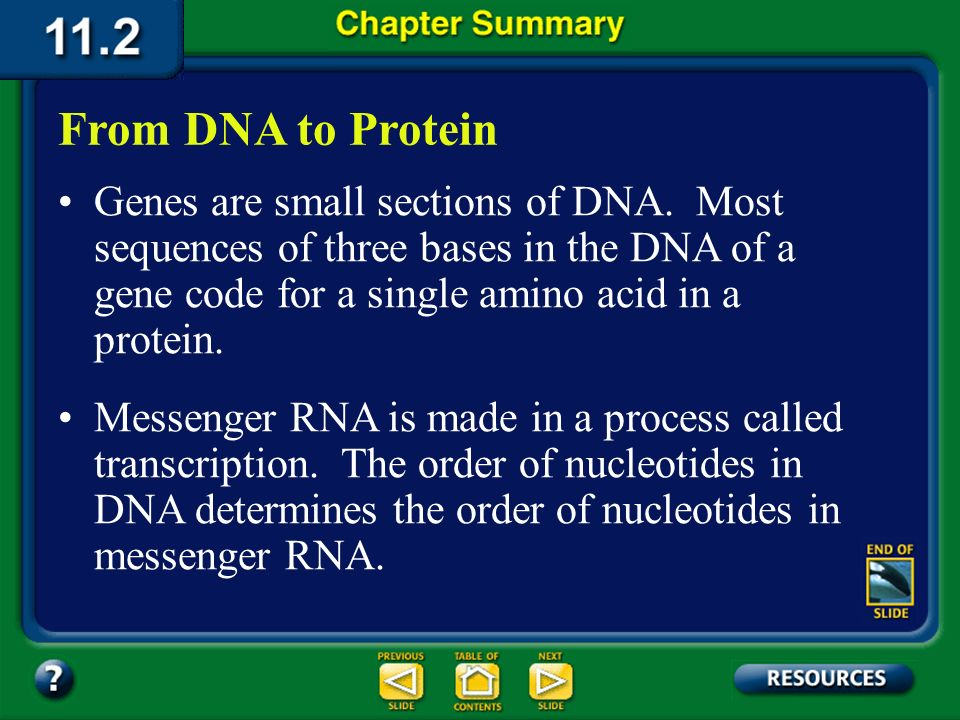 From DNA to Protein Genes are small sections of DNA. Most sequences of three bases in the DNA of a gene code for a single amino acid in a protein.