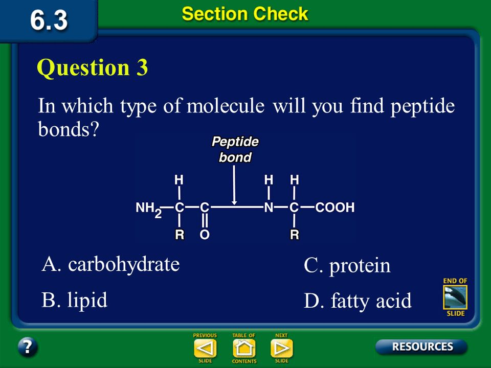 Question 3 In which type of molecule will you find peptide bonds