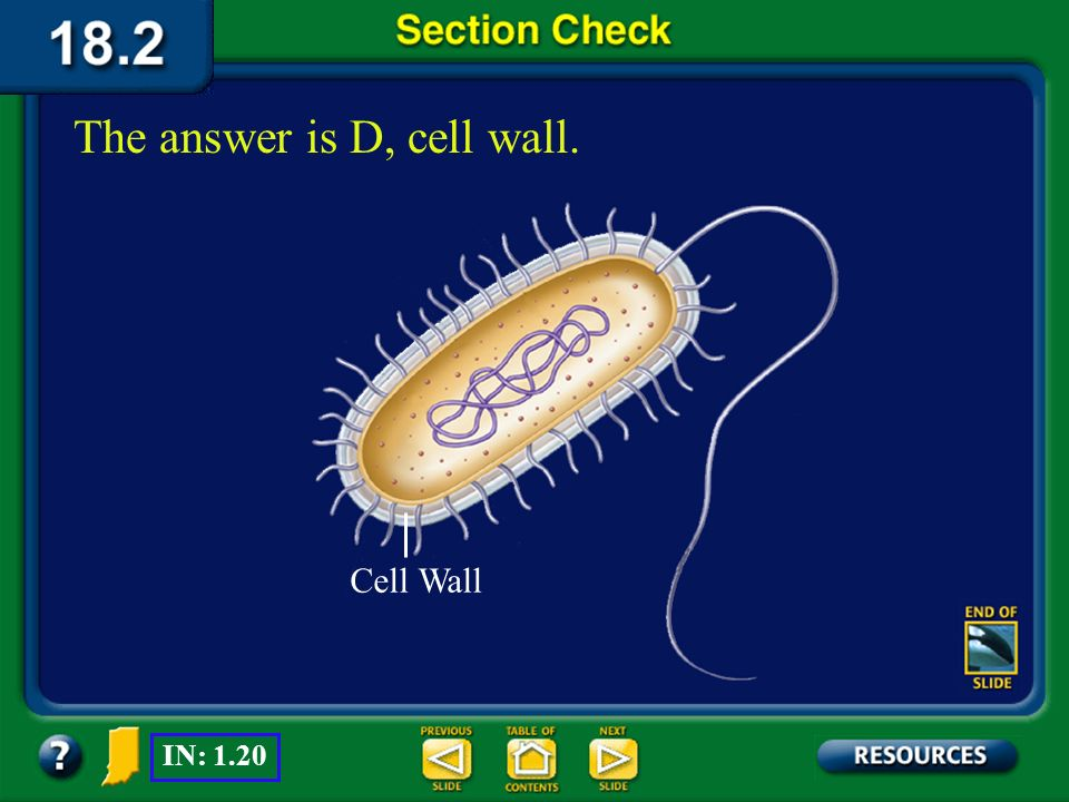 The answer is D, cell wall.