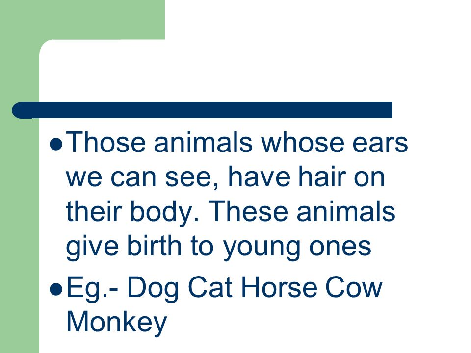 Those animals whose ears we can see, have hair on their body