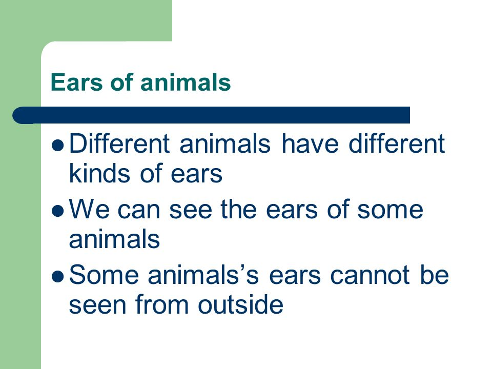 Different animals have different kinds of ears