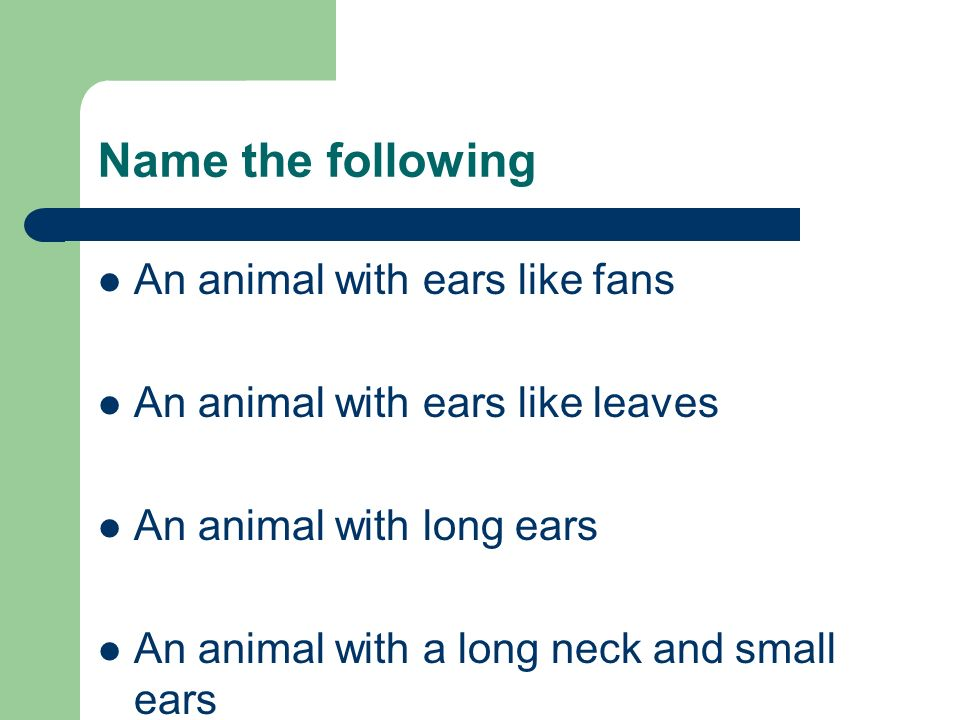 Name the following An animal with ears like fans