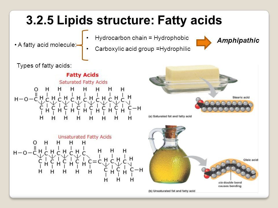 3.2.5 Lipids structure: Fatty acids