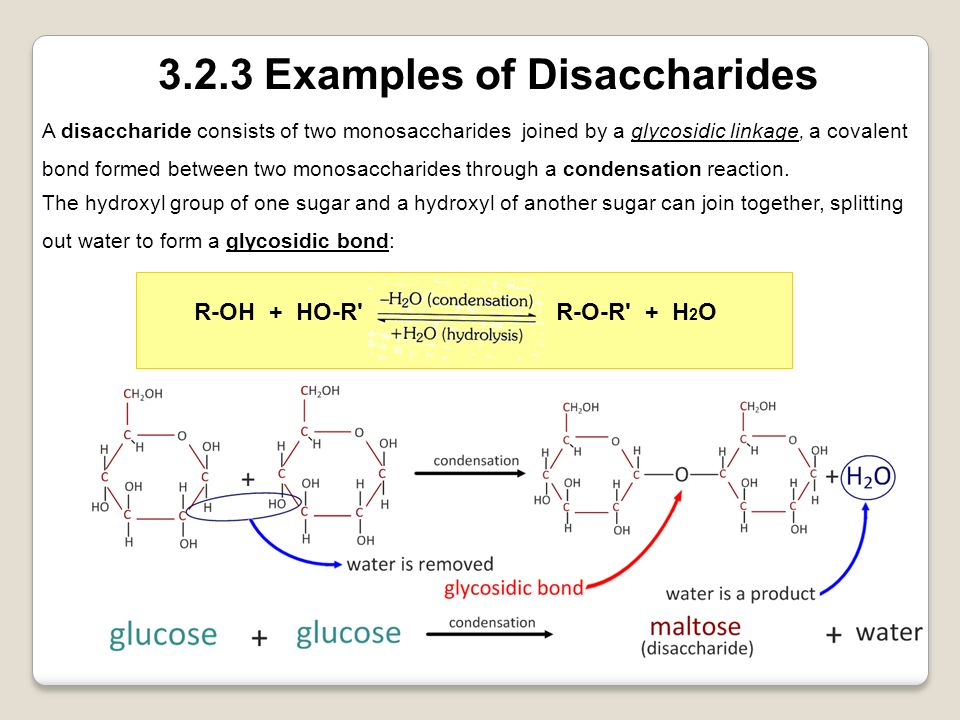 3.2.3 Examples of Disaccharides
