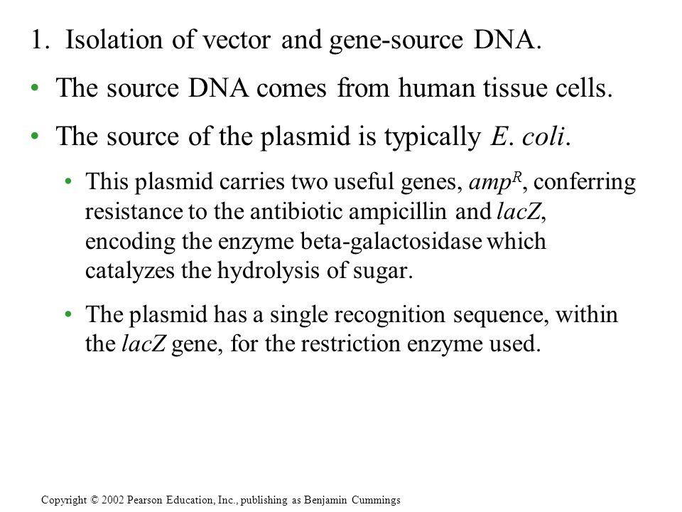 1. Isolation of vector and gene-source DNA.