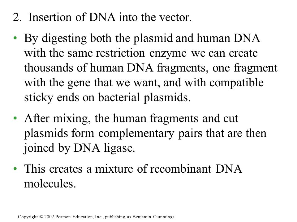 2. Insertion of DNA into the vector.