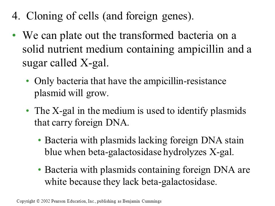 4. Cloning of cells (and foreign genes).