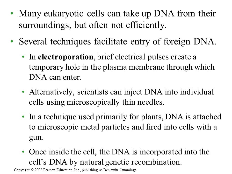 Several techniques facilitate entry of foreign DNA.