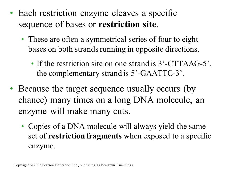 Each restriction enzyme cleaves a specific sequence of bases or restriction site.
