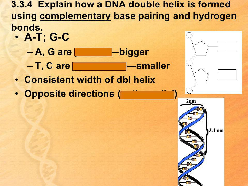 3.3.4 Explain how a DNA double helix is formed using complementary base pairing and hydrogen bonds.