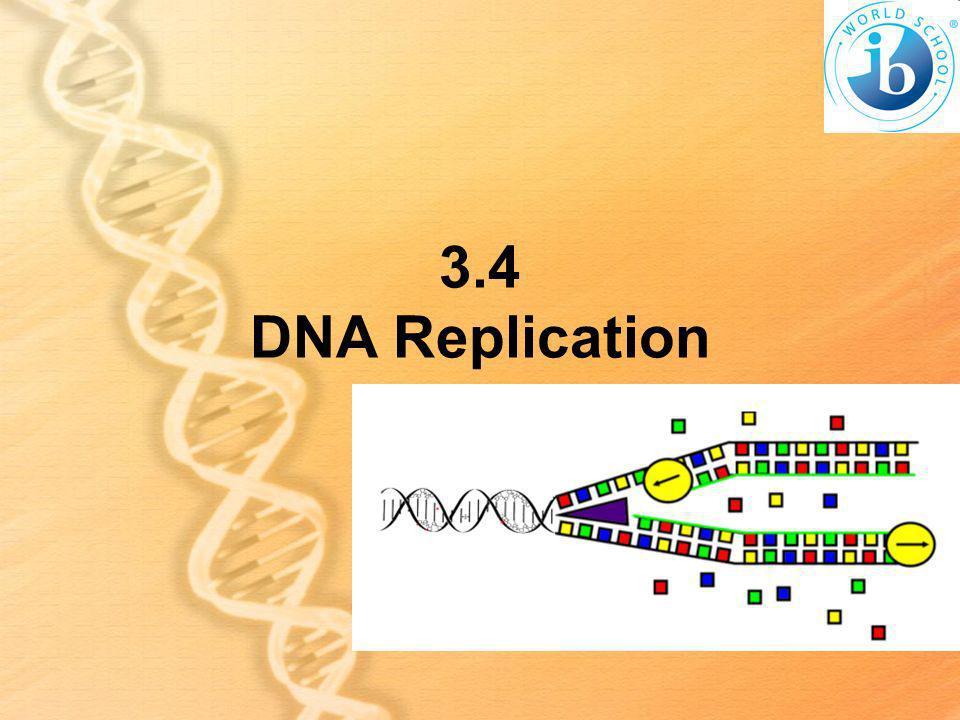 3.4 DNA Replication