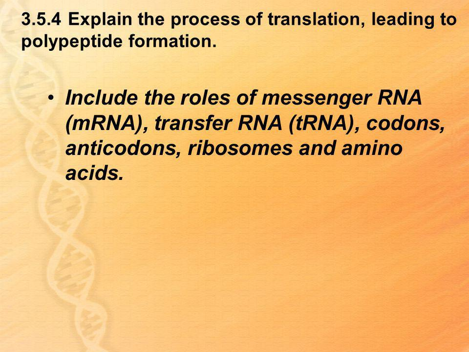 3.5.4 Explain the process of translation, leading to polypeptide formation.