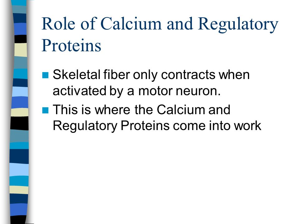 Role of Calcium and Regulatory Proteins