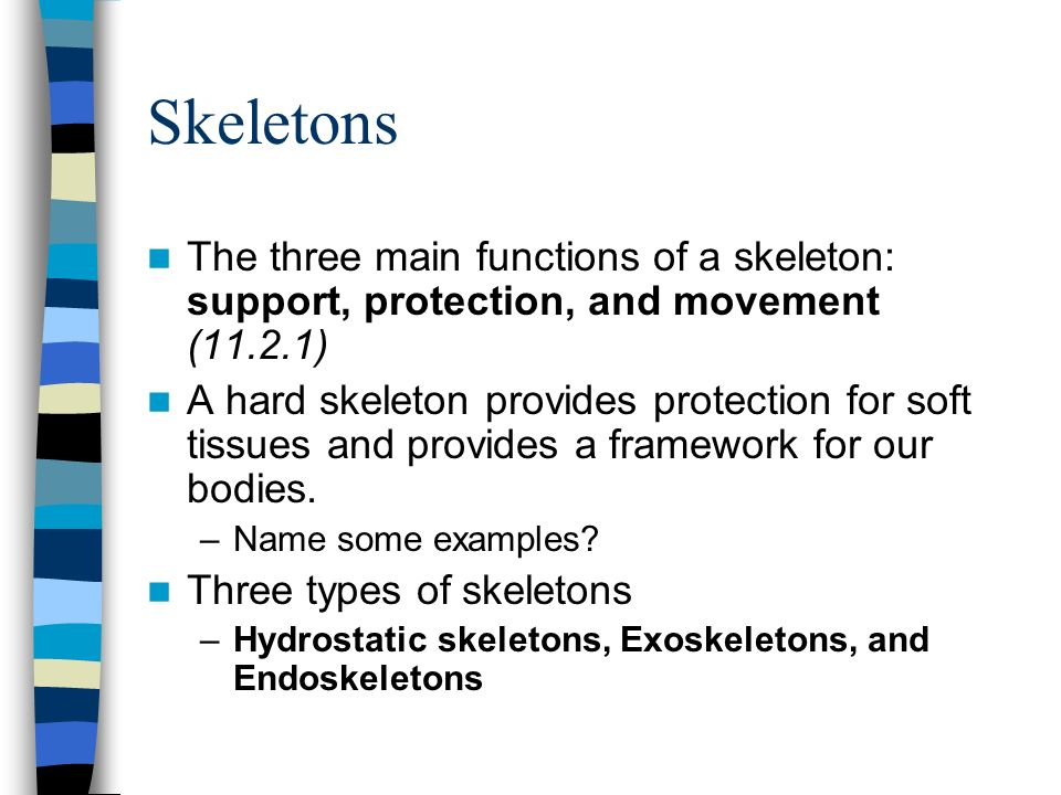 Skeletons The three main functions of a skeleton: support, protection, and movement (11.2.1)