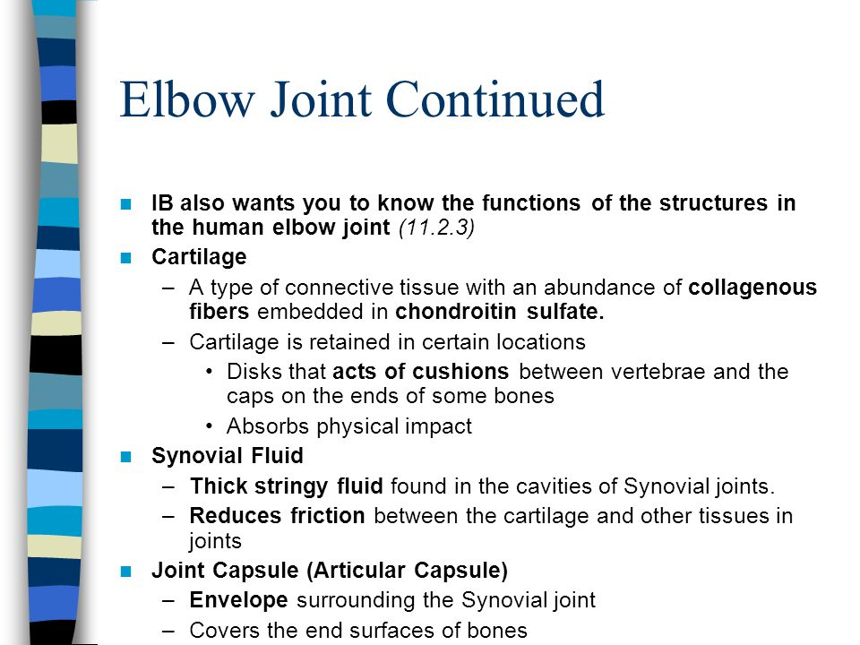 Elbow Joint Continued IB also wants you to know the functions of the structures in the human elbow joint (11.2.3)