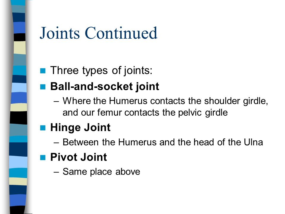 Joints Continued Three types of joints: Ball-and-socket joint
