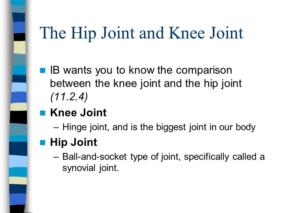 The Hip Joint and Knee Joint