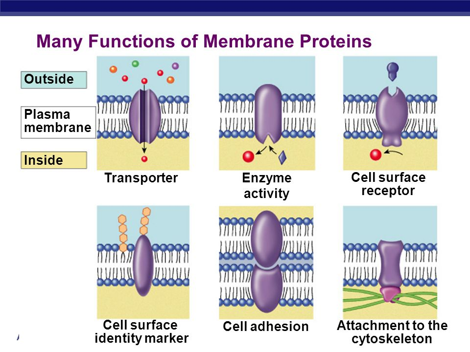 Many Functions of Membrane Proteins