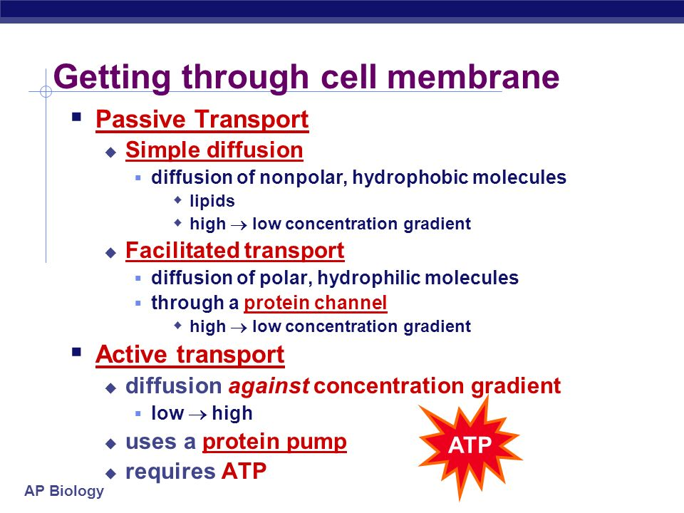 Getting through cell membrane