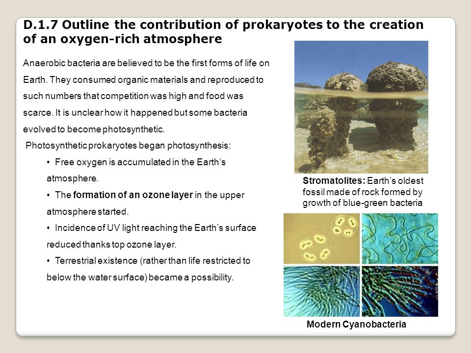 D.1.7 Outline the contribution of prokaryotes to the creation of an oxygen-rich atmosphere
