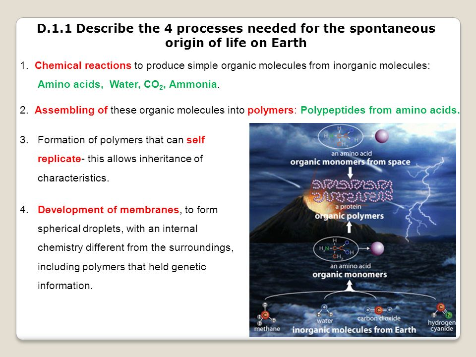 D.1.1 Describe the 4 processes needed for the spontaneous origin of life on Earth