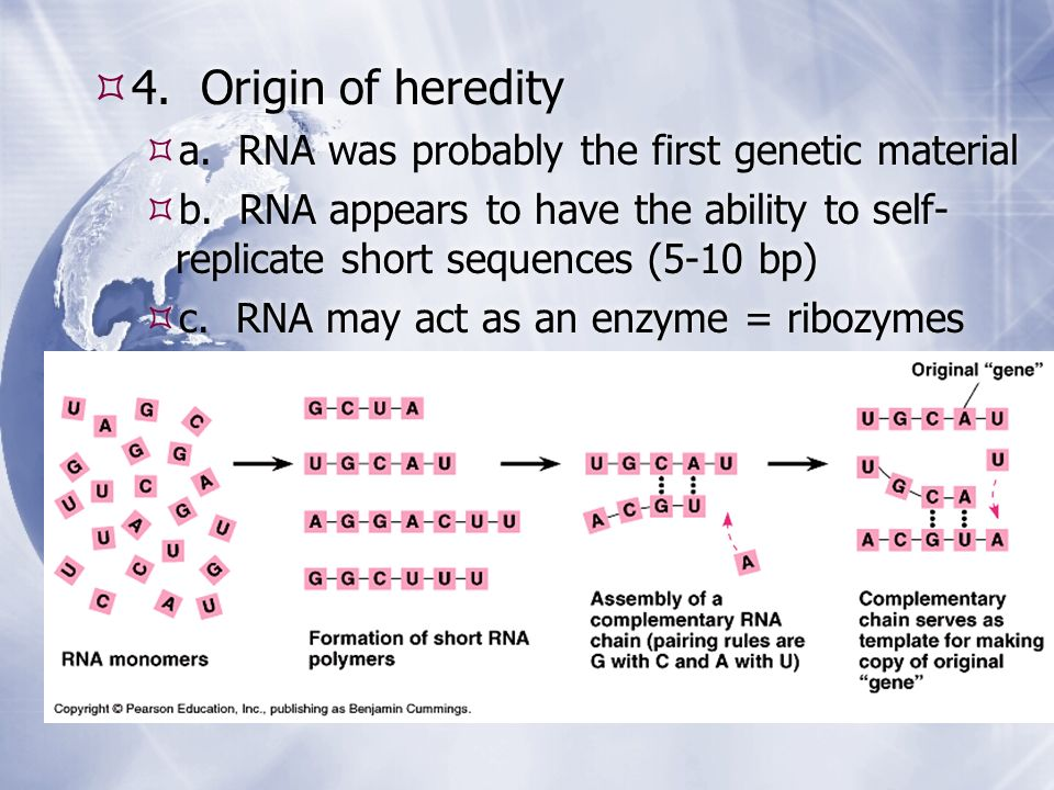 4. Origin of heredity a. RNA was probably the first genetic material