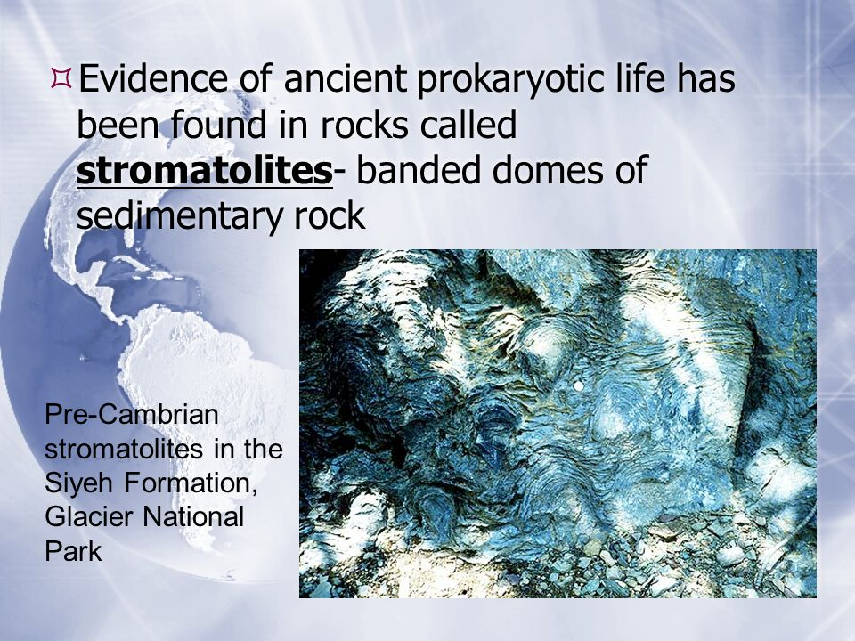 Evidence of ancient prokaryotic life has been found in rocks called stromatolites- banded domes of sedimentary rock