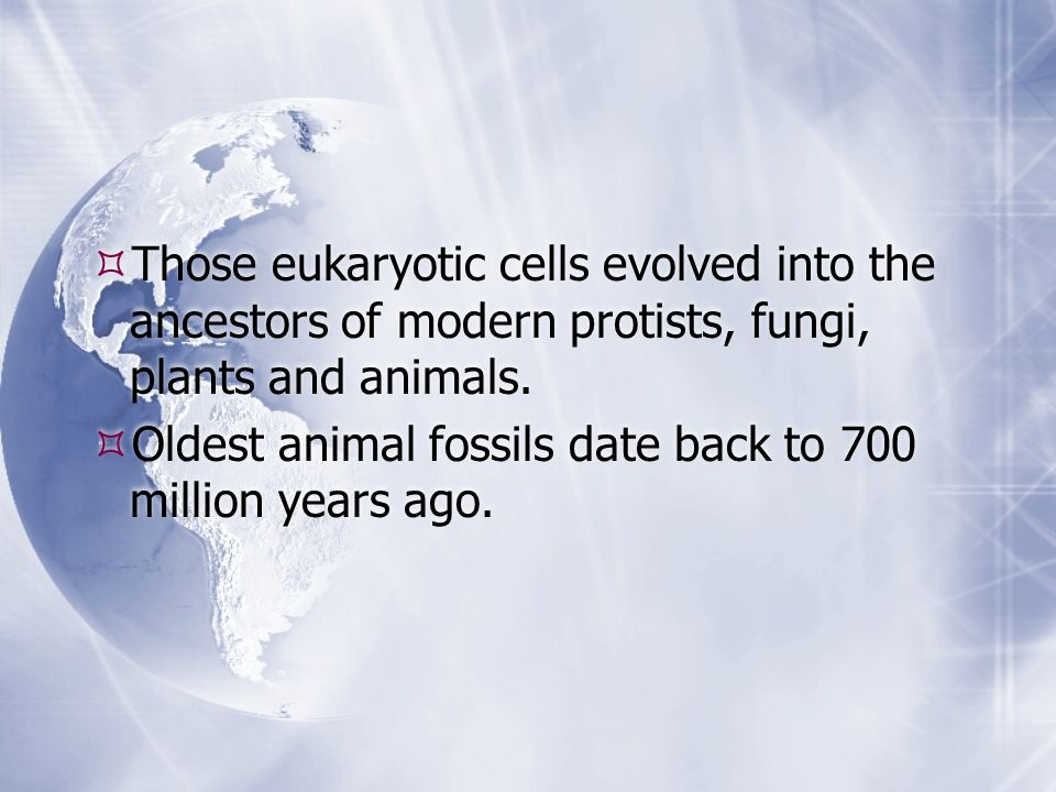 Those eukaryotic cells evolved into the ancestors of modern protists, fungi, plants and animals.