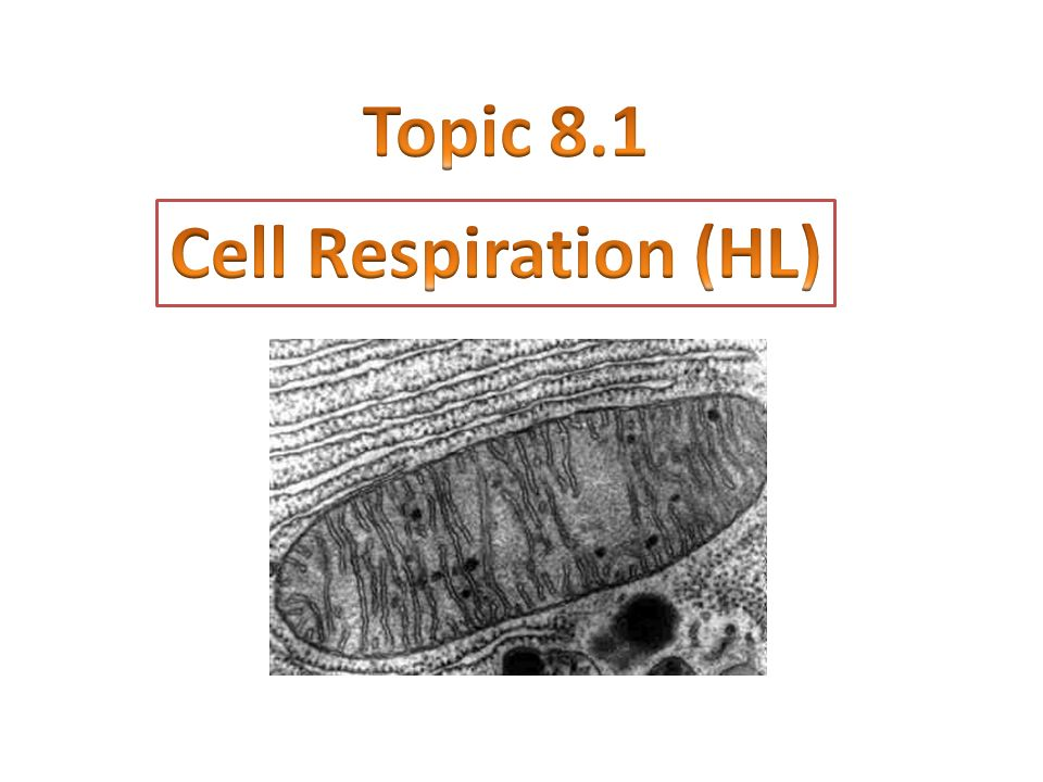 Topic 8.1 Cell Respiration (HL)