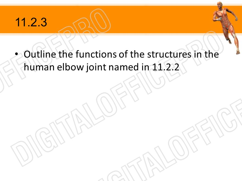 Outline the functions of the structures in the human elbow joint named in