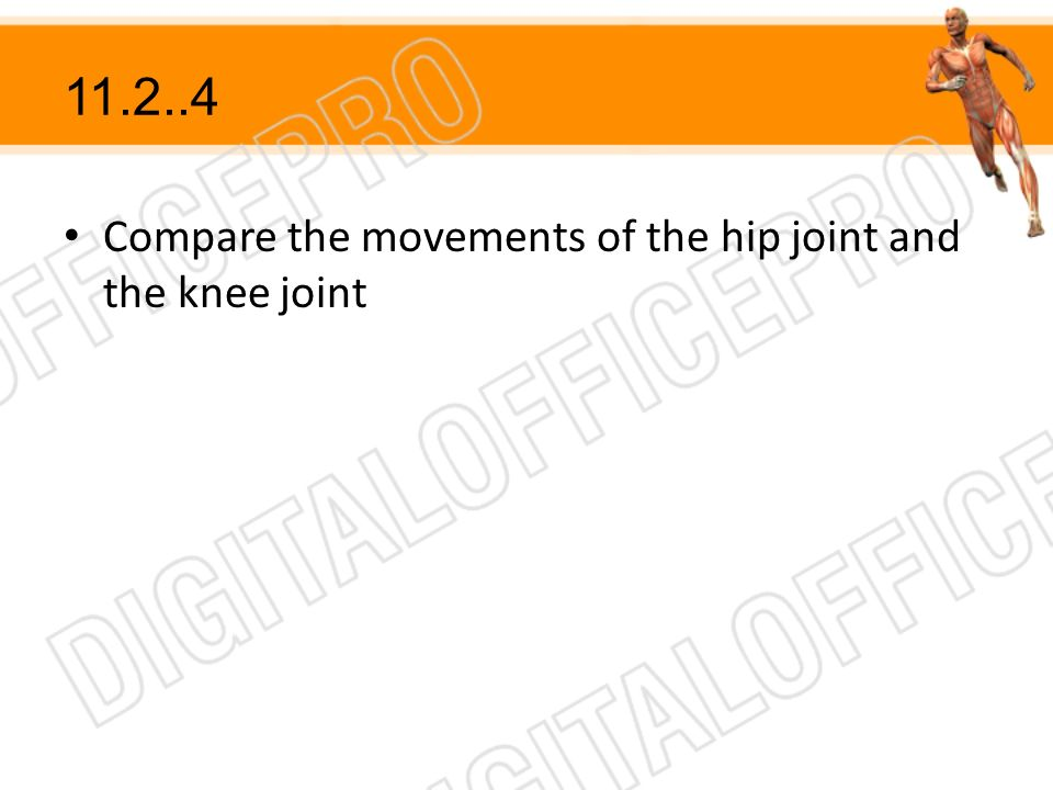 Compare the movements of the hip joint and the knee joint