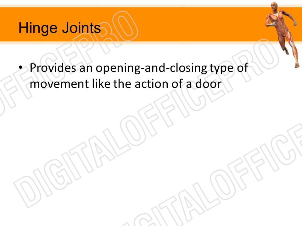 Hinge Joints Provides an opening-and-closing type of movement like the action of a door