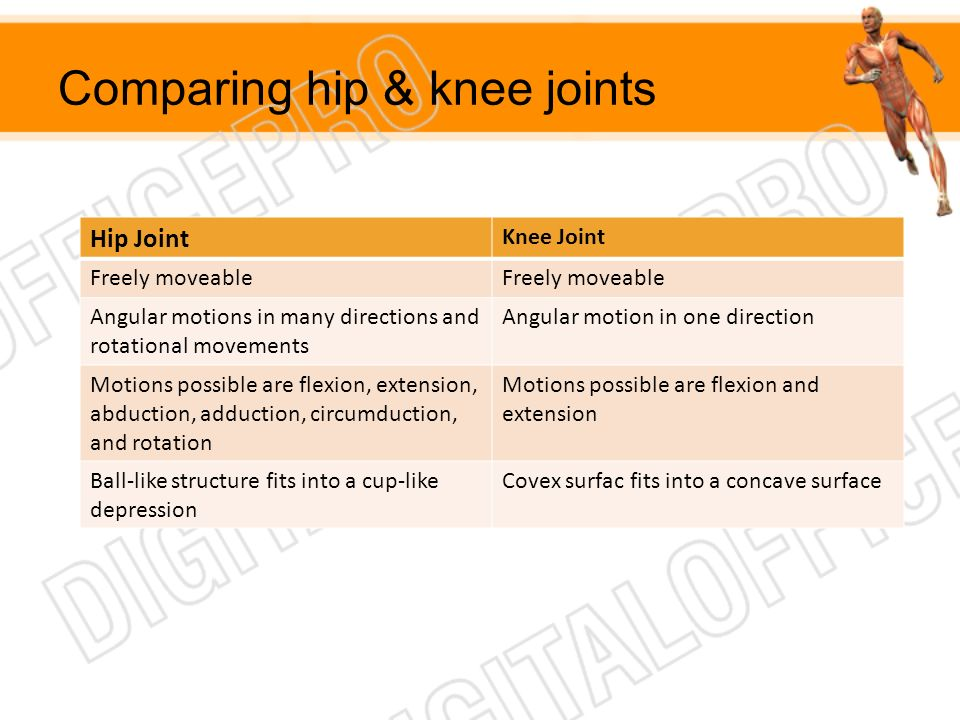 Comparing hip & knee joints