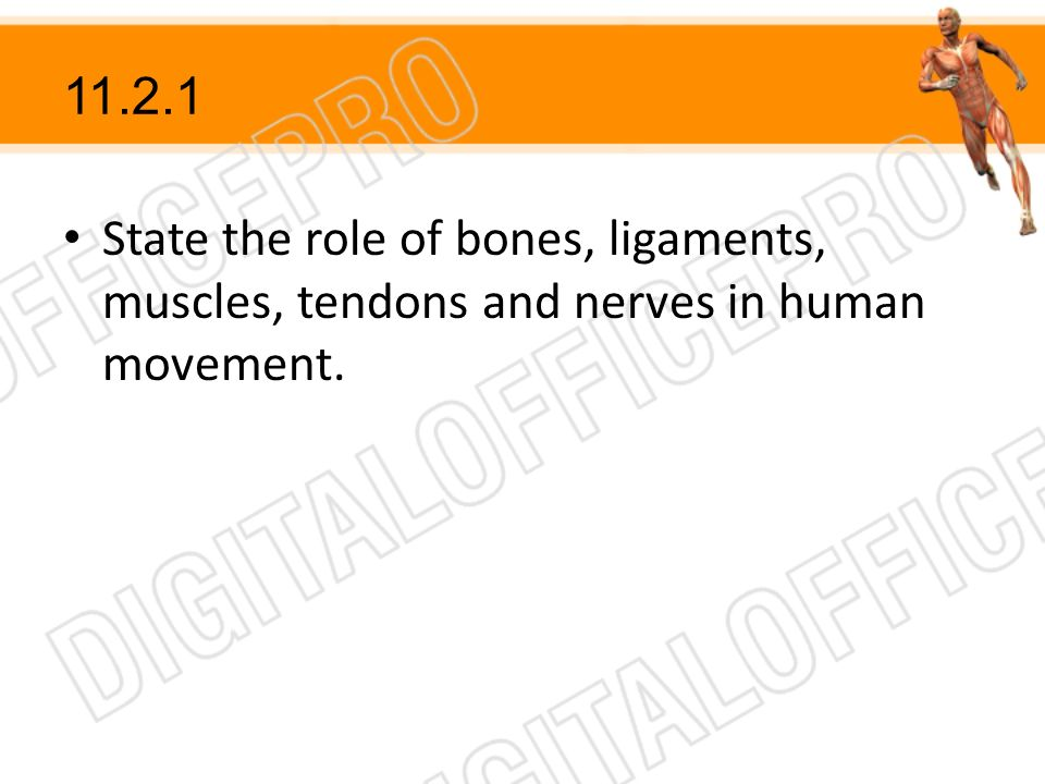 State the role of bones, ligaments, muscles, tendons and nerves in human movement.