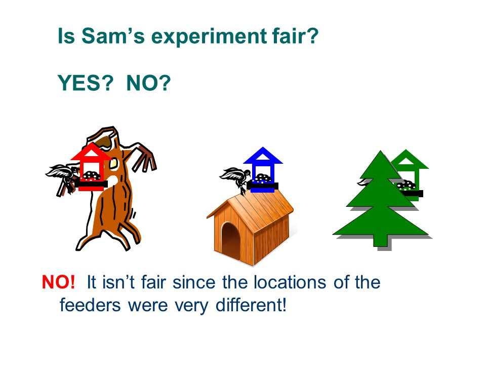 Is Sam's experiment fair YES NO