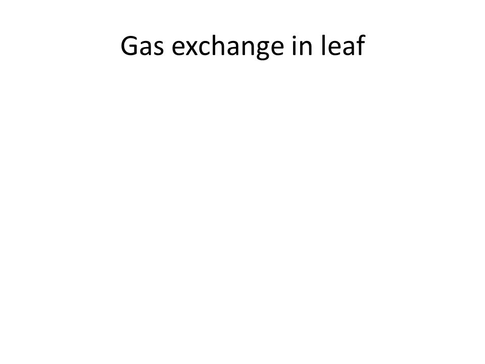 Gas exchange in leaf