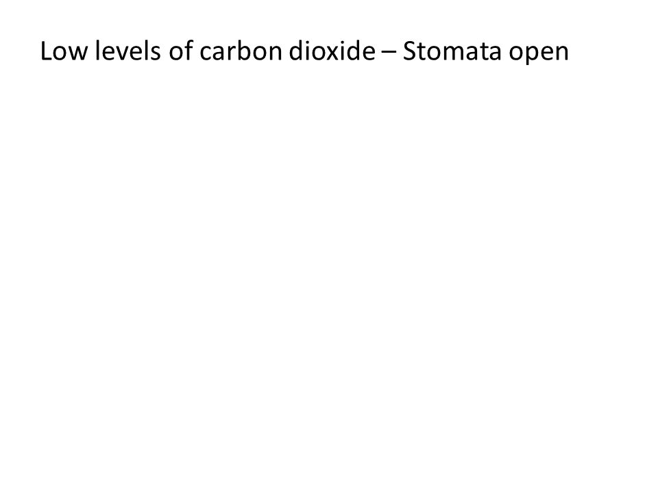 Low levels of carbon dioxide – Stomata open
