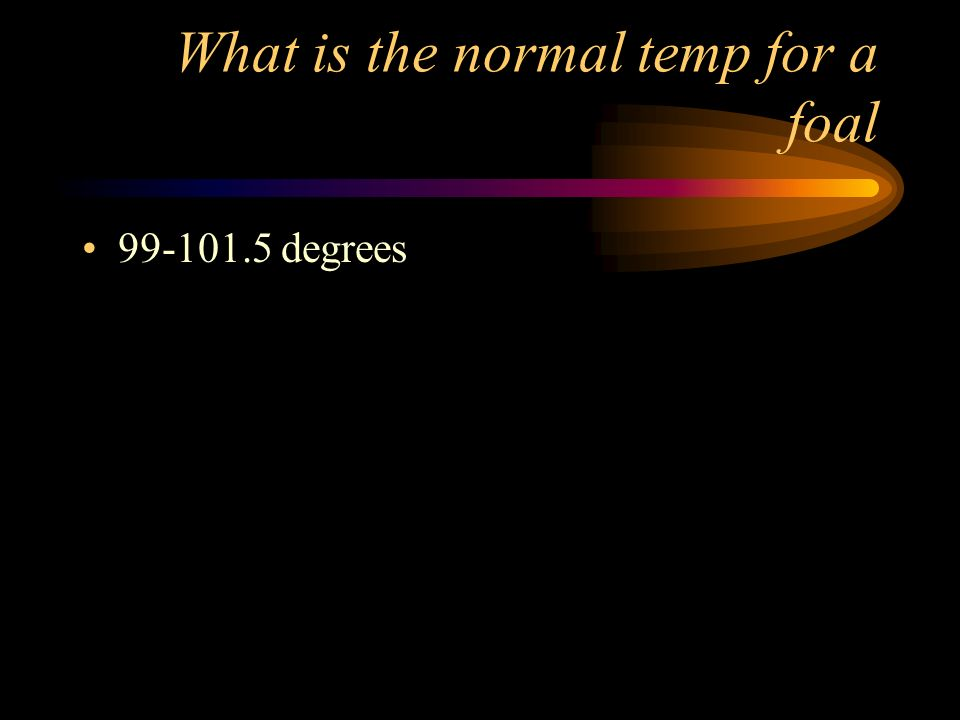 What is the normal temp for a foal
