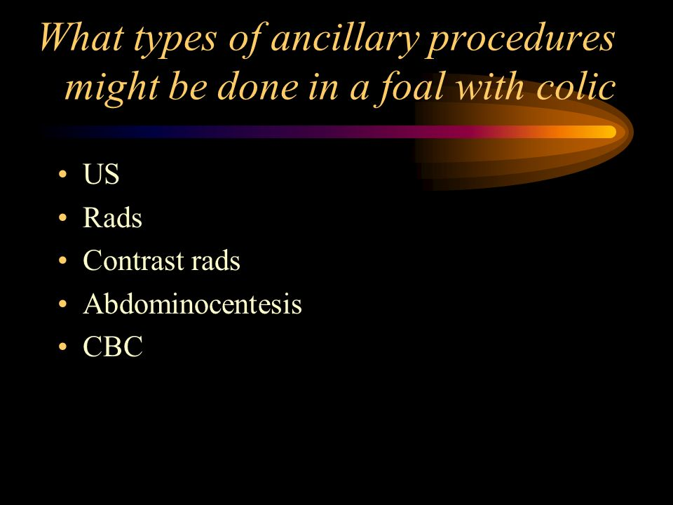 What types of ancillary procedures might be done in a foal with colic