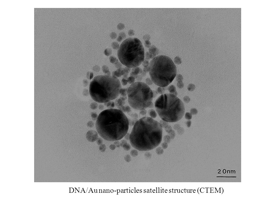 DNA/Au nano-particles satellite structure (CTEM)