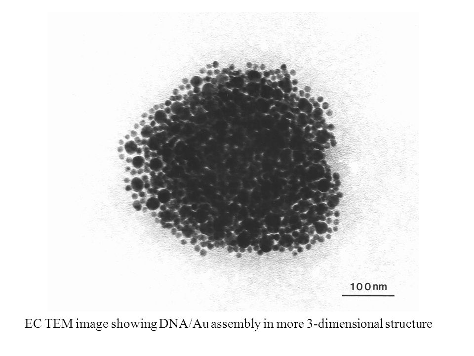 EC TEM image showing DNA/Au assembly in more 3-dimensional structure