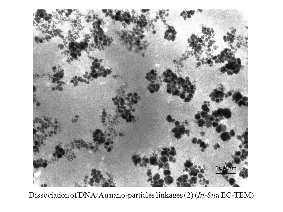Dissociation of DNA/Au nano-particles linkages (2) (In-Situ EC-TEM)