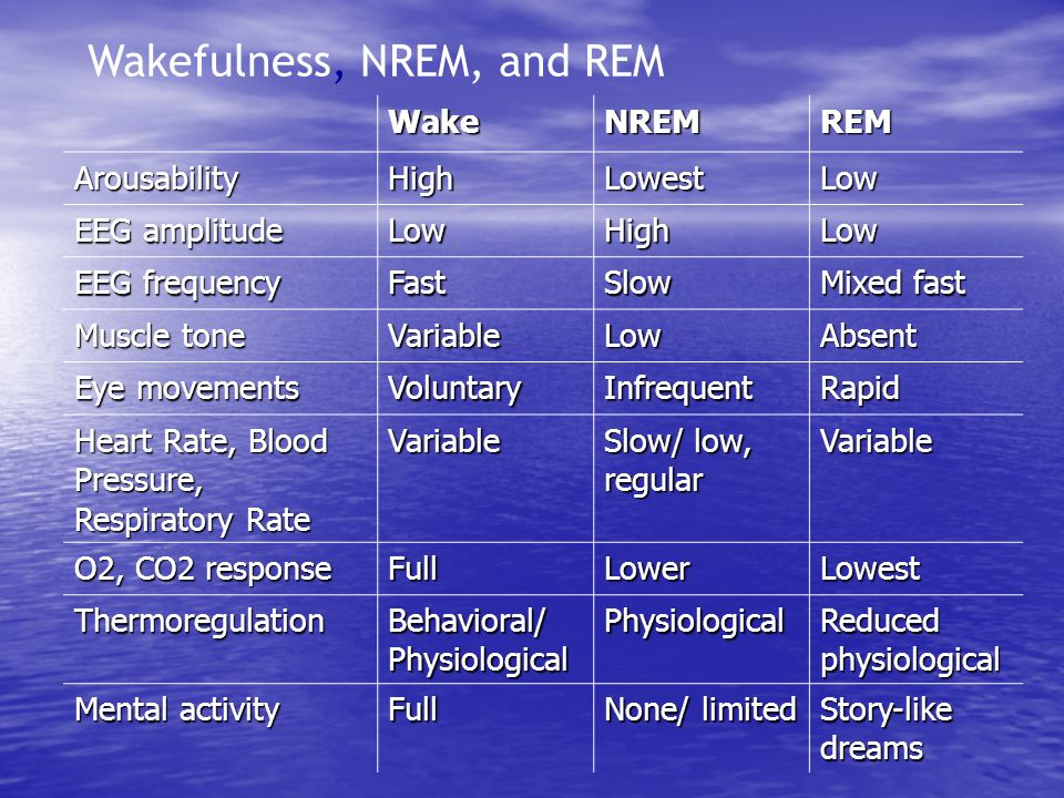Wakefulness, NREM, and REM