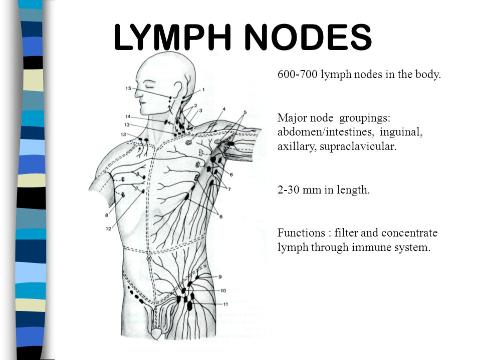 LYMPH NODES lymph nodes in the body.