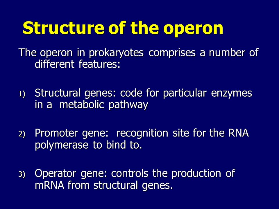Structure of the operon