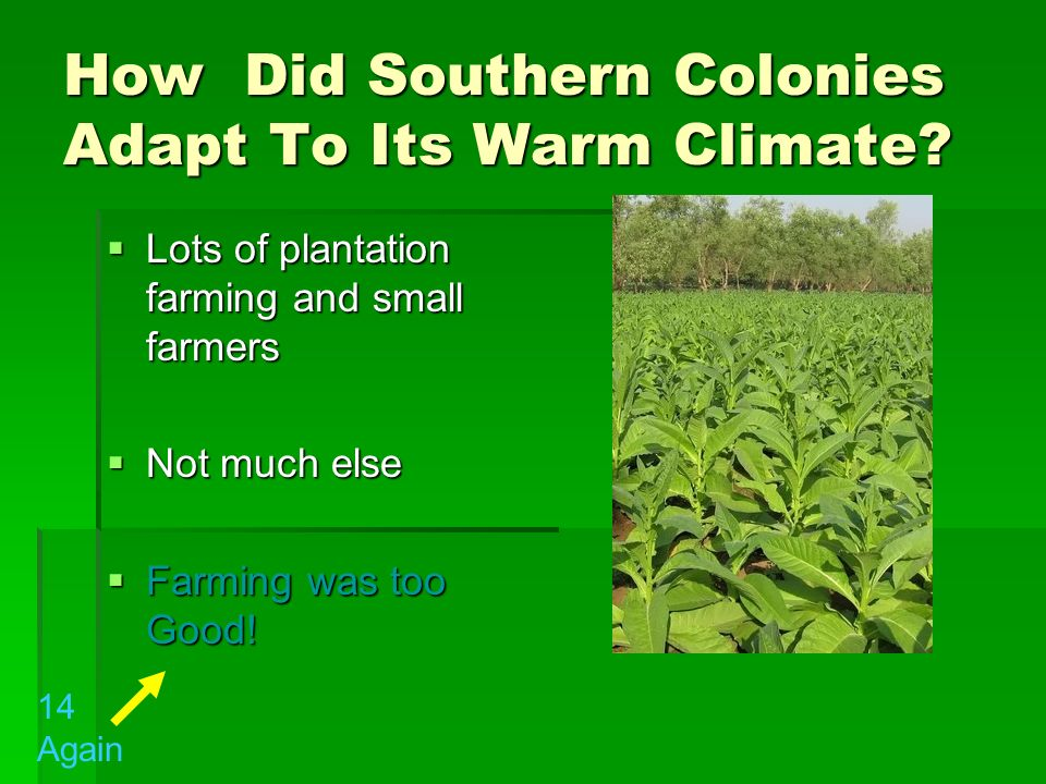 How Did Southern Colonies Adapt To Its Warm Climate
