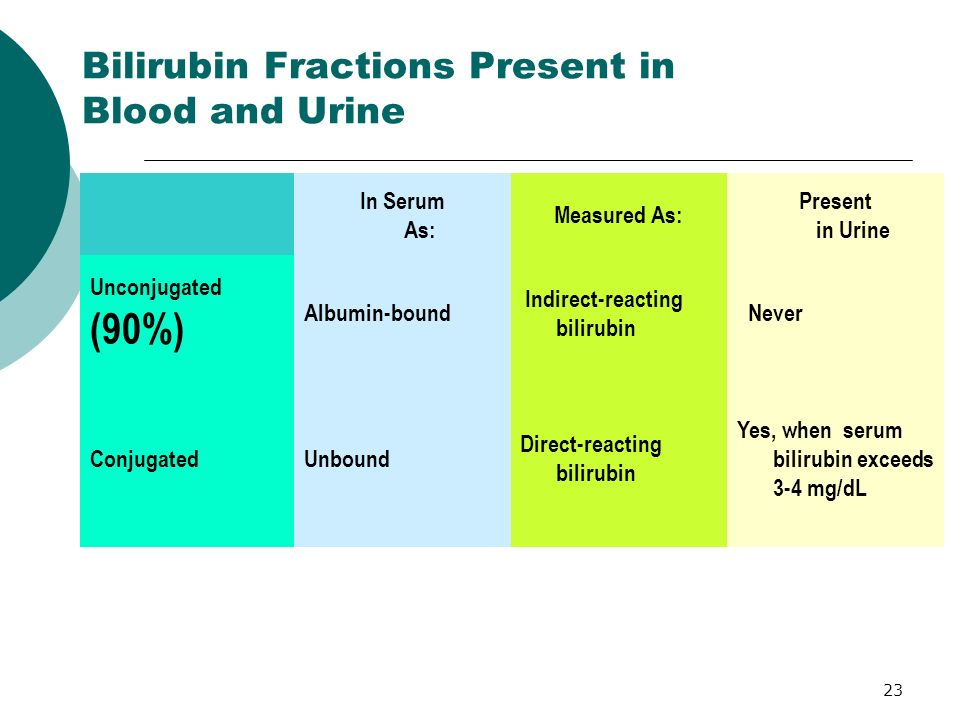 Bilirubin Fractions Present in Blood and Urine